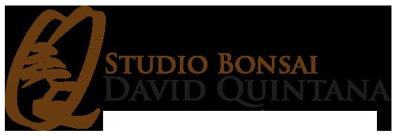 David Quintana - dqbonsai.com